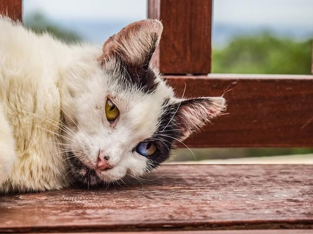 cat-2346895_640