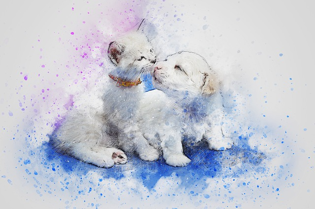cat-2489845_640