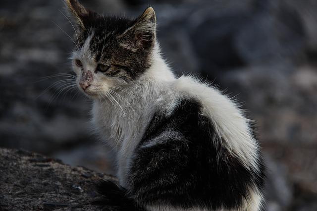 cat-376388_640