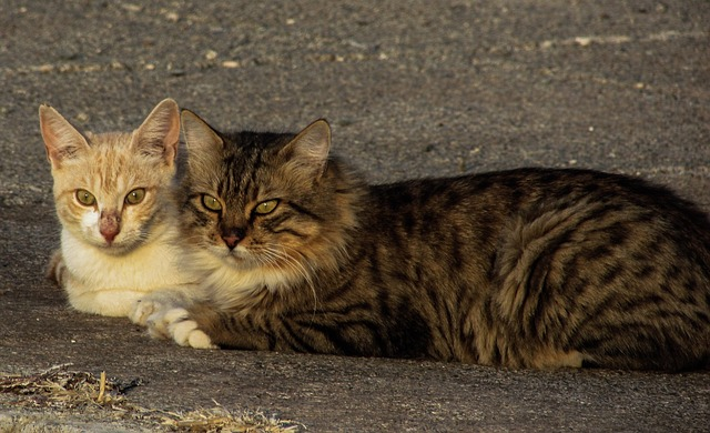 cats-1753847_640