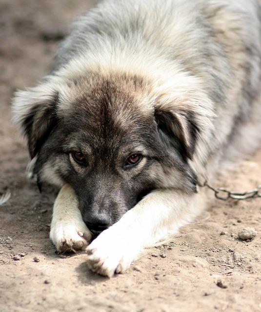 dog-1378174_640