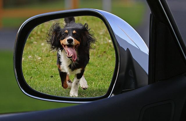 dog-1496904_640