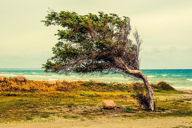 tree-2216284_640